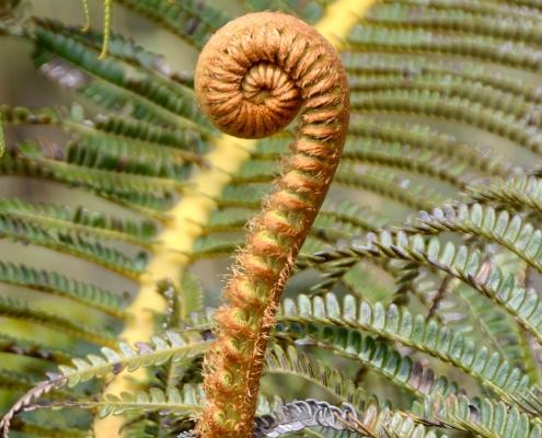 01 Hawaii 1 Fern and Leaf